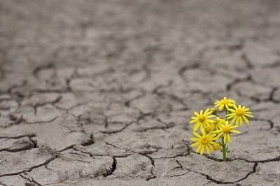 Empresas sostenibles, organizaciones más resilientes